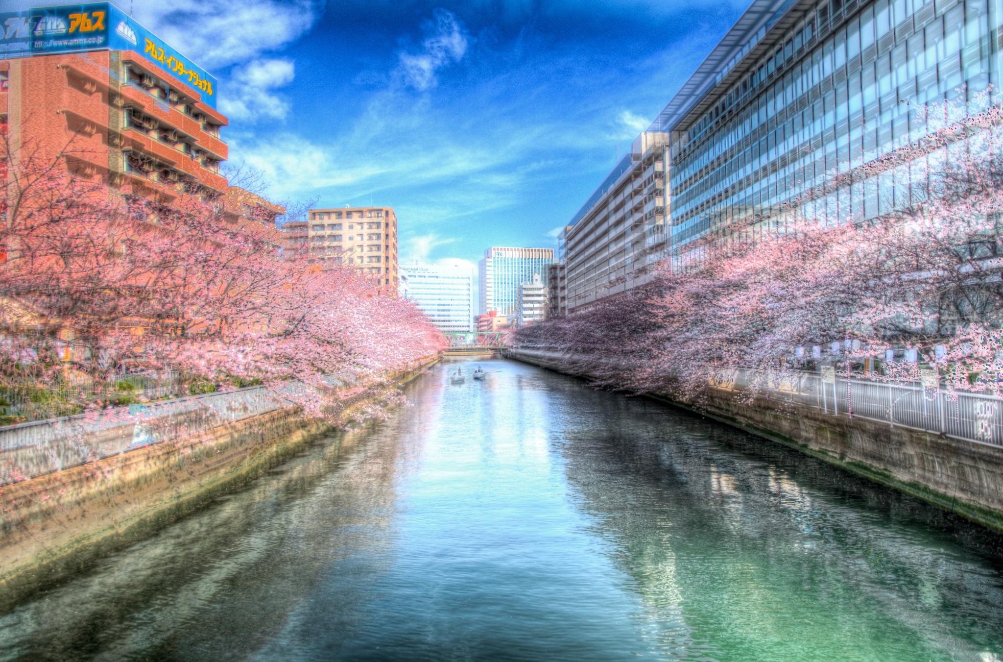 20150327_門前仲町の川沿い桜HDR